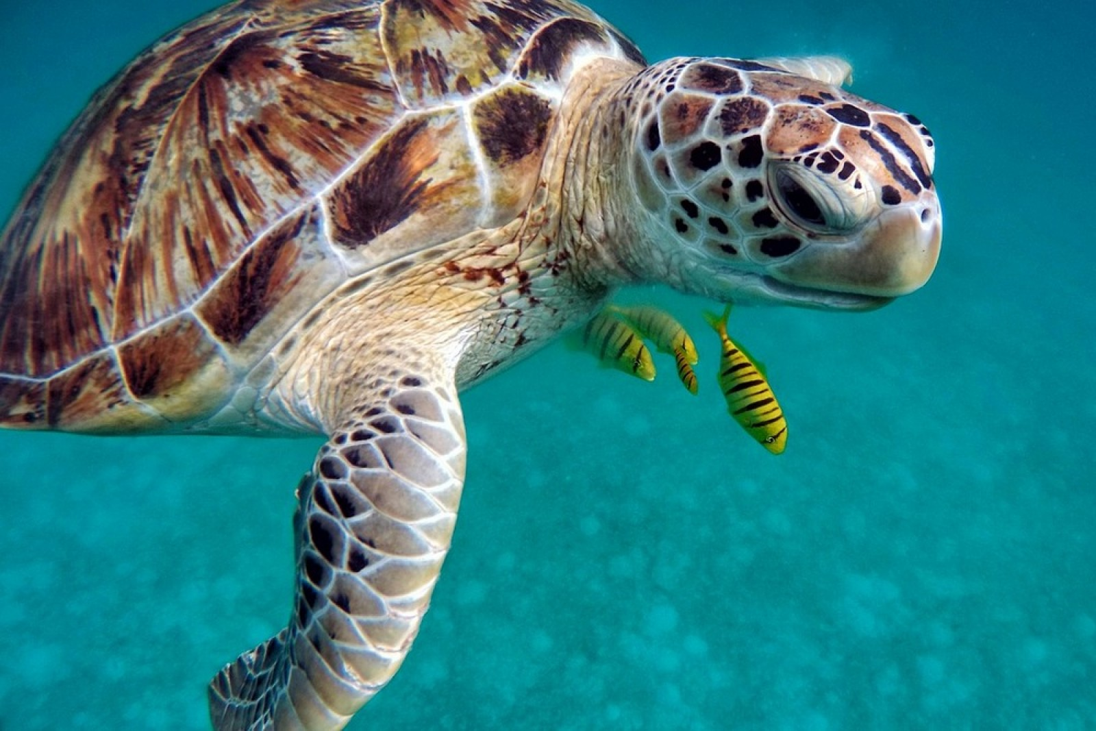 Морские черепахи на Северном Кипре